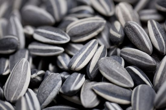 sunflower seeds 5