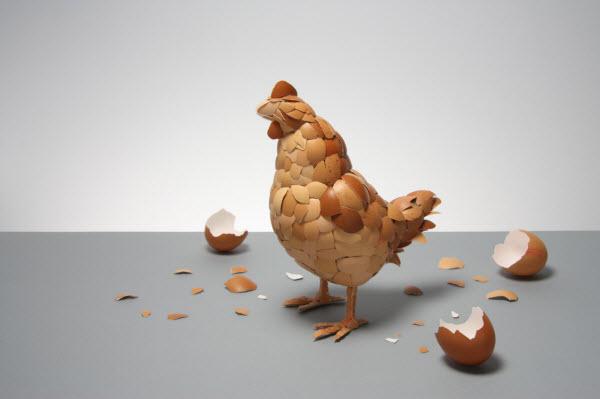 the egg  shell hen