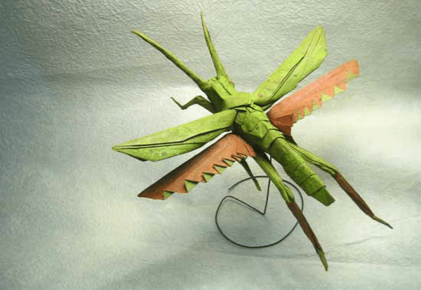 The Insect art