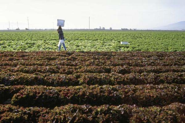 Use of organic fertilizers