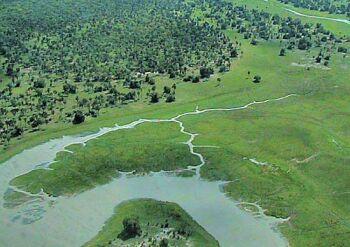 wetland needs restoration