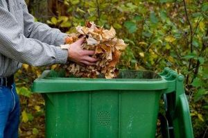137636-425x282-recycling_leaves