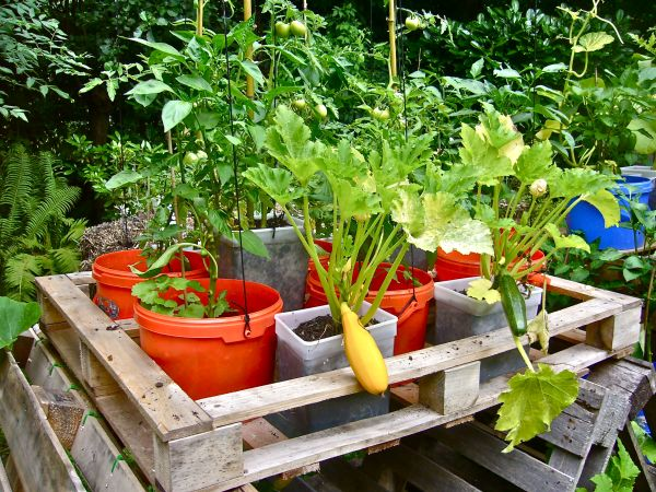 Recycling old buckets or plastic tubs into planter