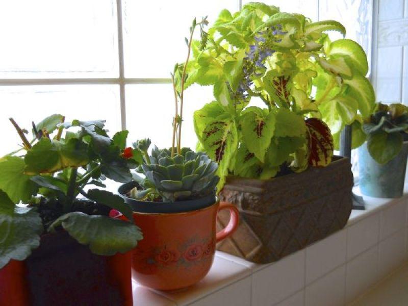 indoor herb garden_4