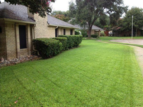 organic lawn_3