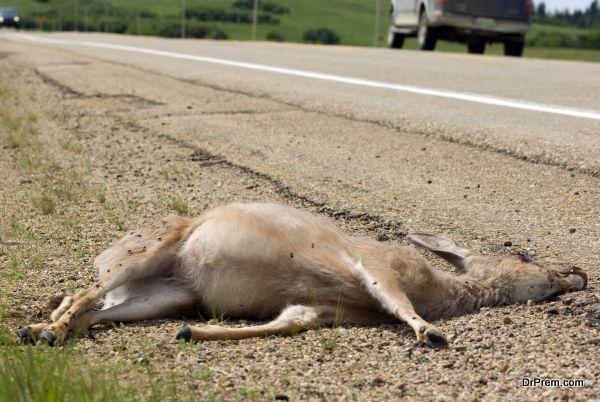 died deer