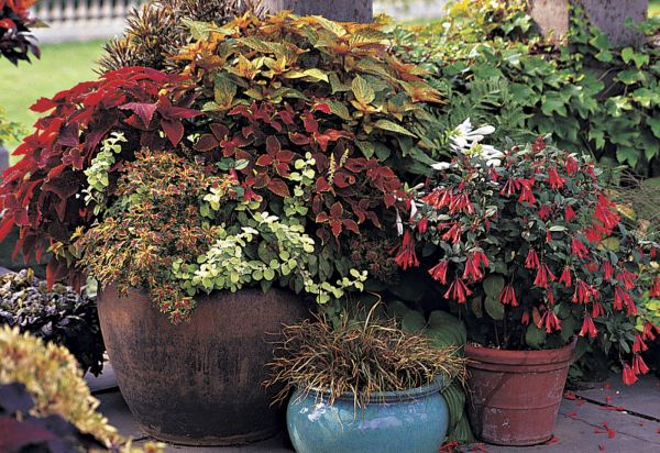 """**FOR USE WITH AP LIFESTYLES**    This undated photo provided by Timber Press shows a container garden as seen in """"Pots in the Garden,"""" by Ray Rogers.  """"It's not just growing plants in pots, but thinking about color, line, form and texture and turning it into a little bit of an art exercise,"""" says Rogers.       (AP Photo/Timber Press, Richard Hartlage)  **NO SALES**"""