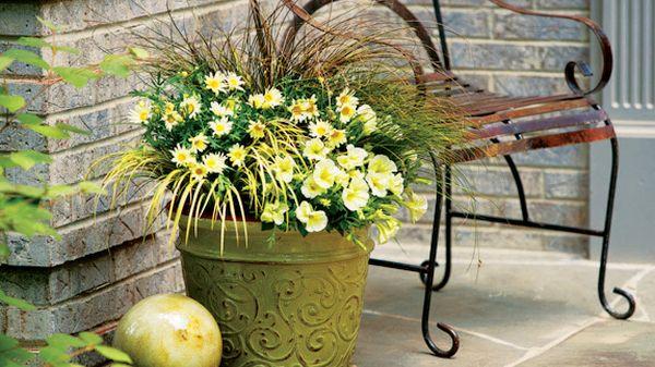 Container gardening (5)
