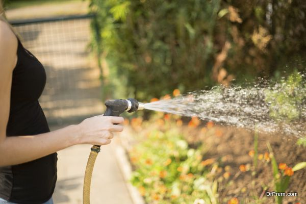A woman's hand with water hose pours a green garden