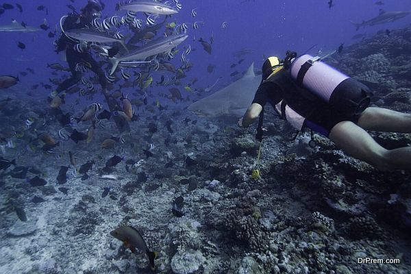 Two people scuba diving with sharks in ocean