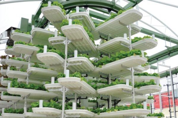vertical farming 7