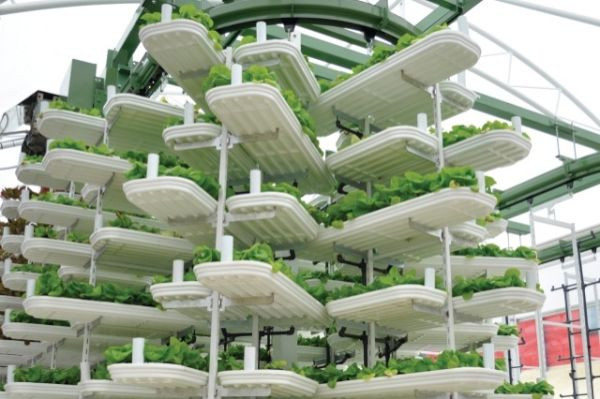 vertical farming 7