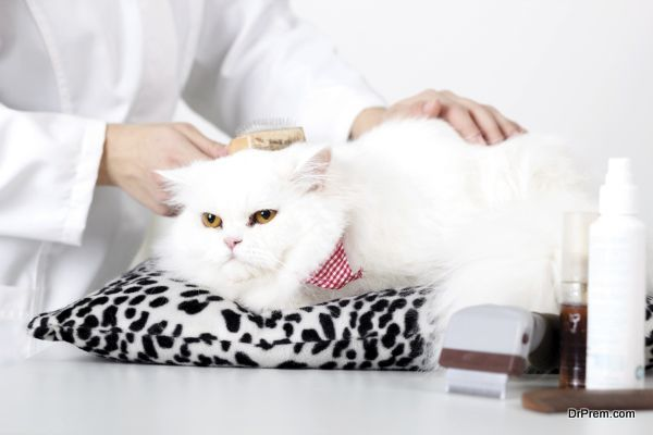 Kitty's veterinarian combing