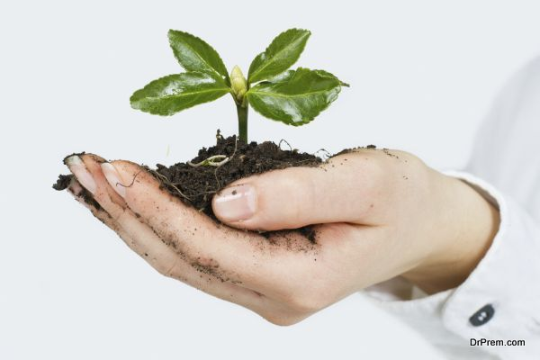 Small plant growing in the human hands.