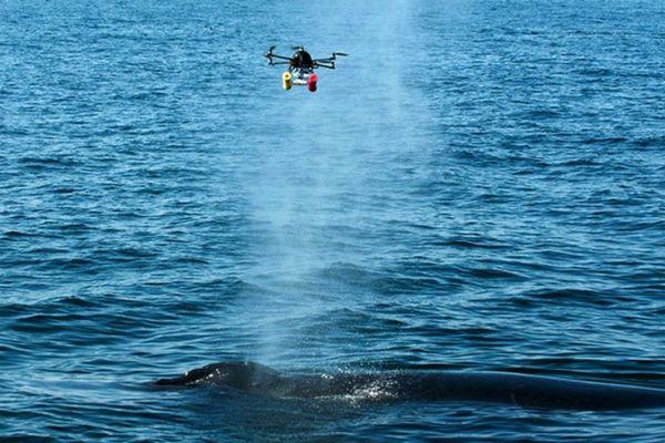Drones assisting in understanding Animal Behavior