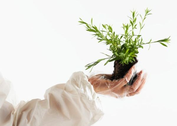 Scientist Holding Plant in Gloved Hand