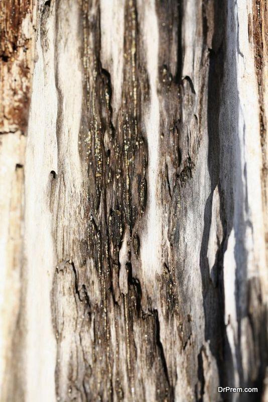 education-on-tree-disease-3