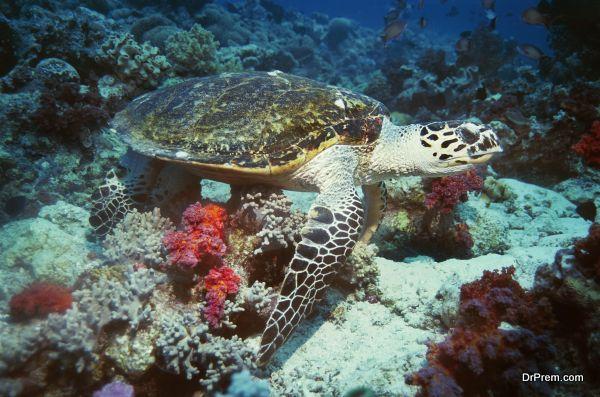 marine-conservation-3