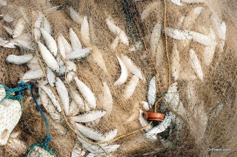 loss of marine life