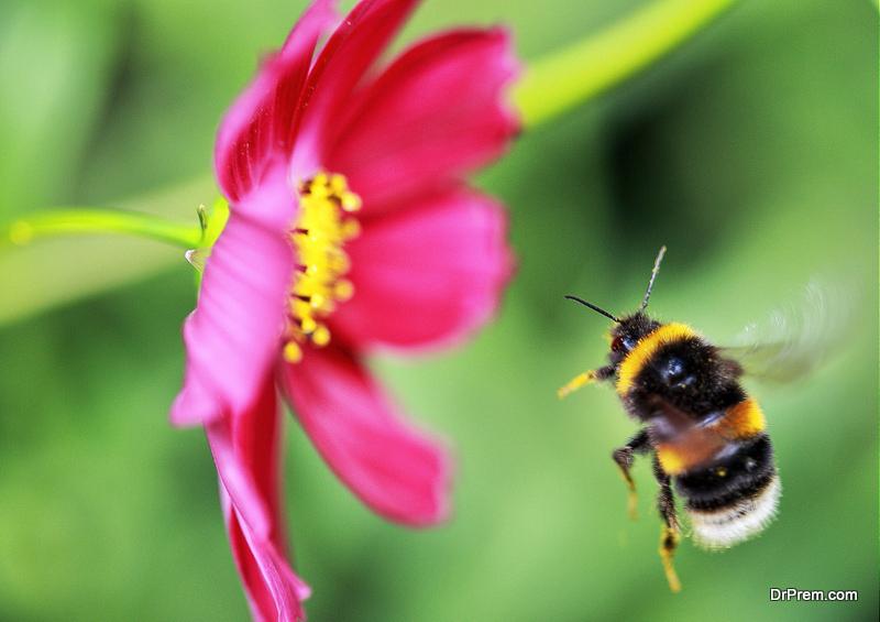 bees haven