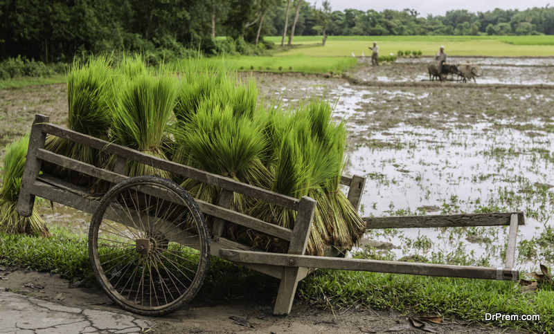 Instability-of-monsoon