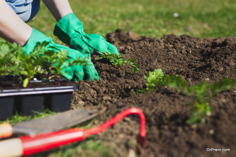 Taking Good Care of a Southern Lawn Organically