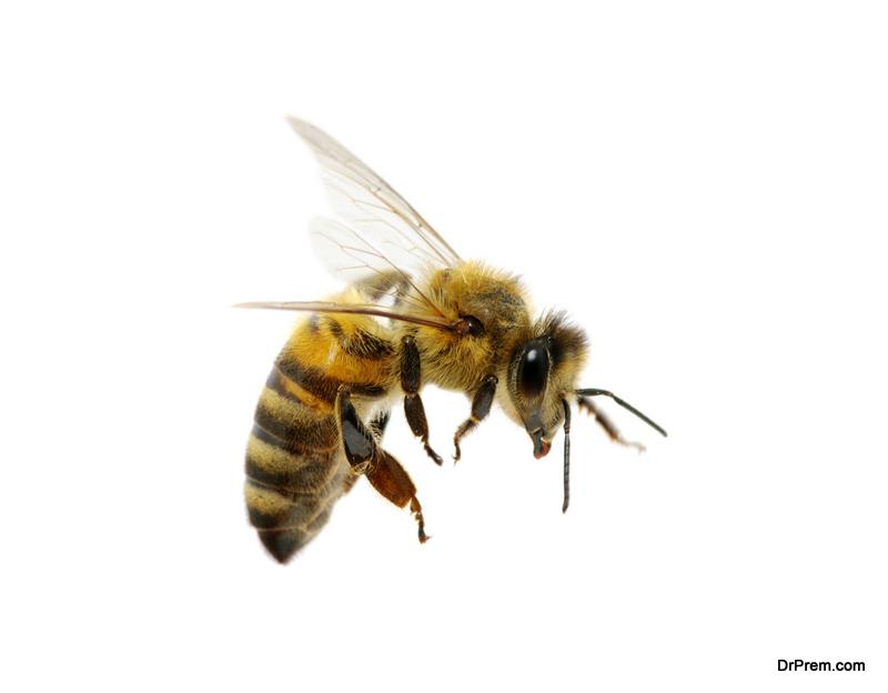 Hawaiian bee species