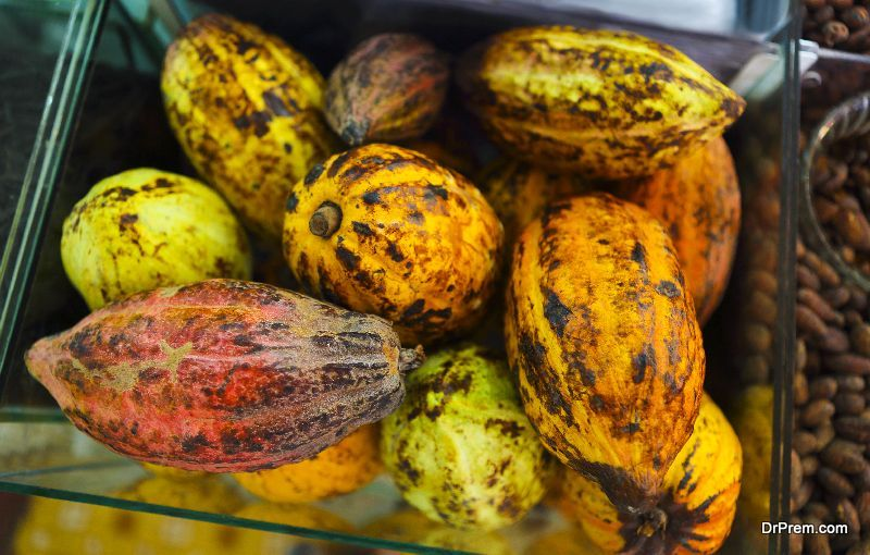 Growing cocoa in India