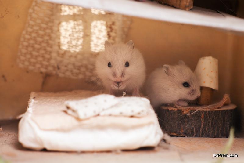 make a hamster house using cardboard