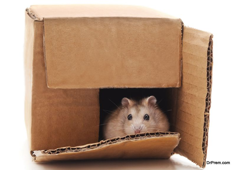 make a hamster house using cardboard