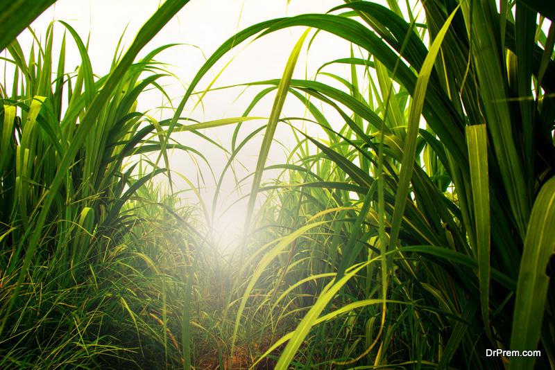 water intensive crops