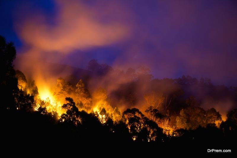 brunt of bush fires