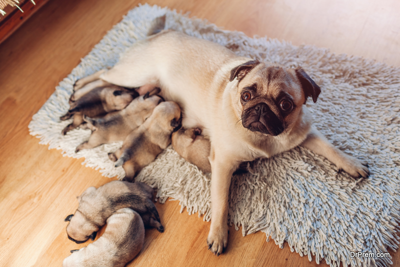 mother dog is feeding her pups