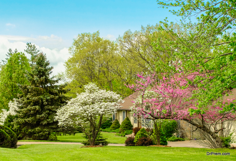 Looking After the Beautiful Flowering Trees of Missouri