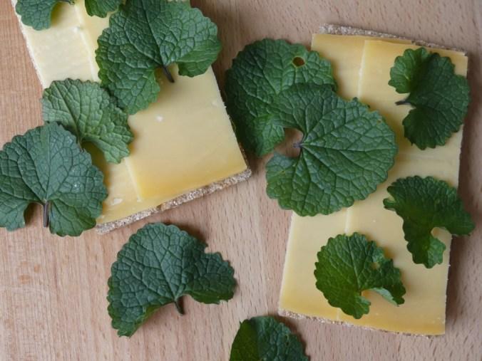 Cracker met kaas en look zonder look