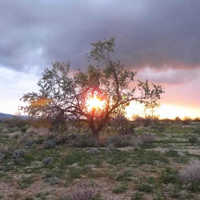 Burning Bush, sunlight through tree