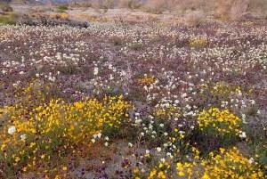 Joshua Flower Field