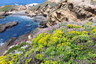 Sea Lion Cove marker icon