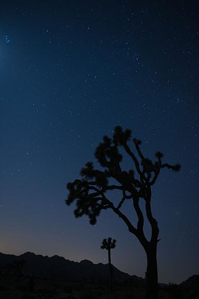Joshua Tree at twilight