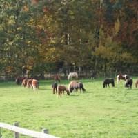 Die Pferdeweide