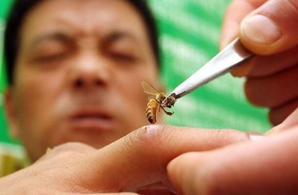 Bee health benefits