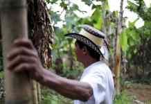 Fair Trade Coffee Farmer