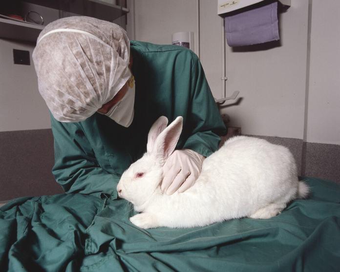 Animal testing on rabbit