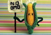 No GMO Corn