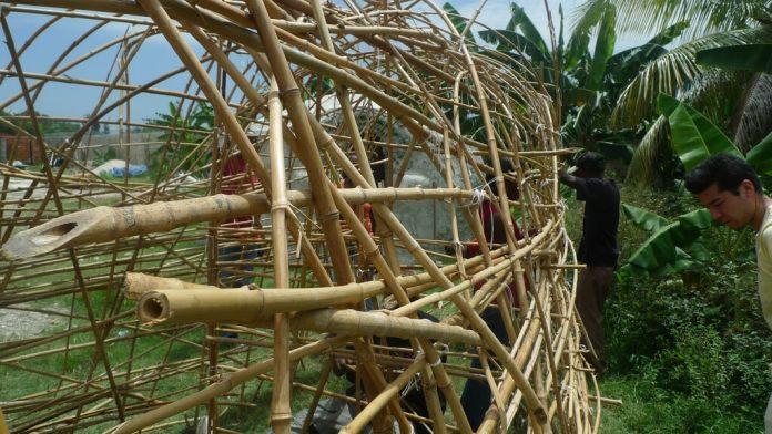 bamboo Haiti
