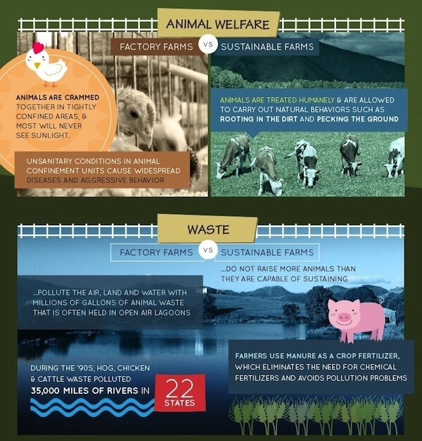 factory farming infographic banner