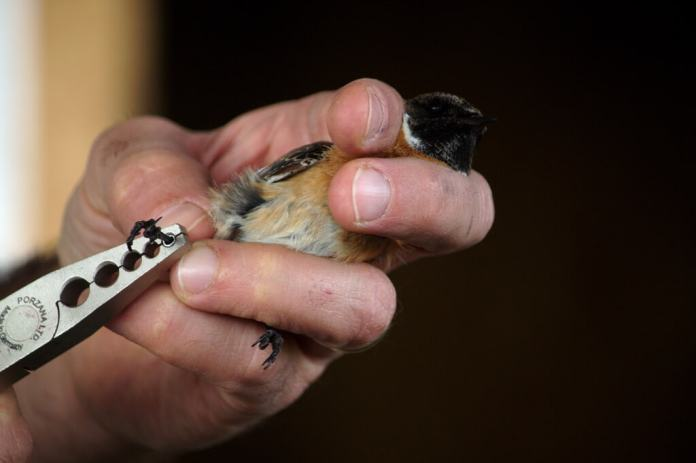 tagged bird