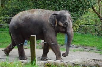elephant at woodland park zoo