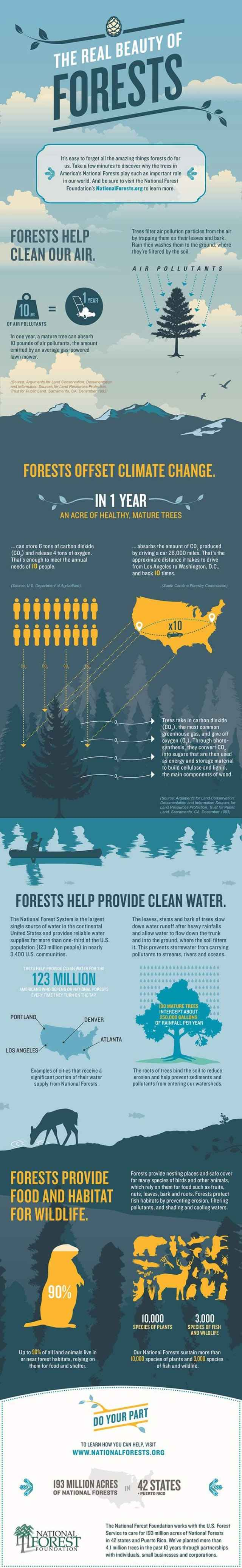 Forests Infographic