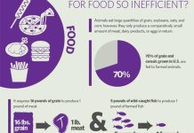 Veganism & The Environment Infographic